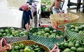 九龍江平原的厚皮酸橙價格最近期間持續下跌。(示意圖源:互聯網)