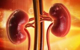 人體腎臟。(示意圖源:互聯網)