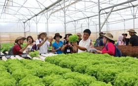 記者參觀無公害蔬菜的生態種植場。(示意圖源:互聯網)