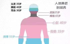 人體各個器官變老時間表。(圖源:互聯網)