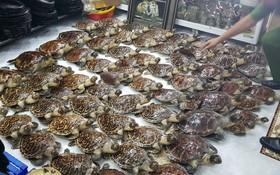 被查獲的珍稀海龜標本。(圖源:P.Q.T)