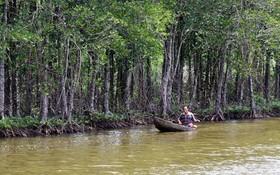 安江省的防護林。