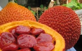 木鱉果。(圖源:互聯網)