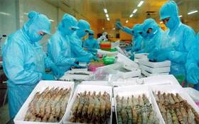 美國對我國的蝦類反傾銷稅降為零。(示意圖源:互聯網)