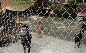據興安省金童縣良朋鎮同里村居民反映,黎氏安的狗群曾咬傷過 不少人。