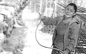 陳氏嬌詩在照料她種植的菇類。