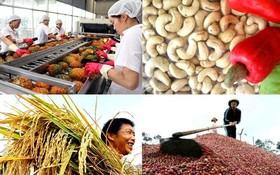 中國目前是越南的主要農產品出口市場,越南農產品在中國市場廣受歡迎。(示意圖源:互聯網)