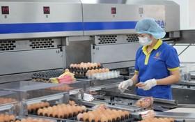 巴勳公司革新生產線提高產品質量。