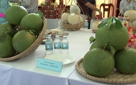某水果展會上陳列的慶永綠皮柚。(圖源:互聯網)