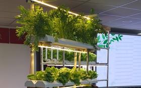 家庭智能營養菜櫃一瞥。