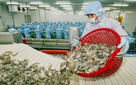 越南蝦類出口頻遭美國商務部的反傾銷調查。(示意圖源:田升)