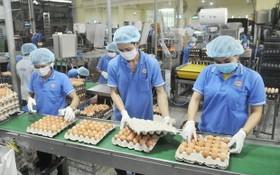 永成達公司生產南部西區原料的蛋類。