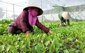 兩名女園夫在照顧菜圃內的蔬菜。(圖源:TNO)
