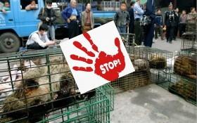 亞太 WWF 呼籲禁止野生動物交易活動。(示意圖源:互聯網)