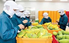 農業與農村發展部:今年第一季度,農產品出口額達90億6000萬美元,進口額達62億美元。(示意圖源:互聯網)