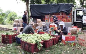 同奈省許多農民通過社交網向消費者銷售農產品。(圖源:臉書)