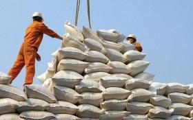 本月份出口 40 萬噸大米。(示意圖源:互聯網)