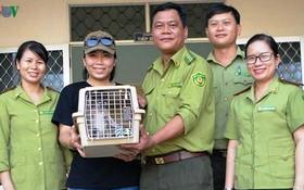 平定省林檢分局向越南野生動物保護中心代表移交一隻珍稀灰足猴。(圖源:VOV)