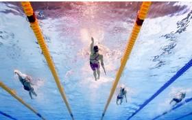 游泳比賽。(圖源:互聯網)