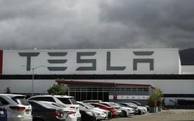 加州特斯拉(Tesla)工廠可望獲准重啟。(圖源:AP)