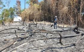 據初步統計,被燒毀的森林面積達32.3公頃。(圖源:清鐘)