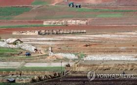 朝鮮開豐郡農田一片寂寥。(圖源:韓聯社)