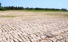政府總理最近頒行第601號公電,要求集中應對在中部和西原區域的酷熱、乾旱和海水入侵情況。(圖源:互聯網)