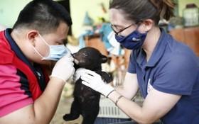 小熊正獲專家悉心照料與保護。(圖源:黃黎)