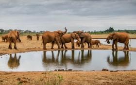 我國對野生動植物保護取得進步