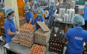 永成達食品股份公司的蛋類加工一瞥。