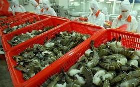圖為草蝦粗加工工段。(圖源:阮幸)