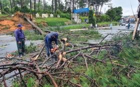 多棵大樹被連根拔起,使當地的交通局部受阻。(圖源:段堅)