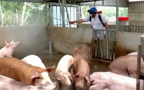 獸醫人員對發生非洲豬瘟的養豬場及其附近進行噴射消毒。(圖源:仲玲)