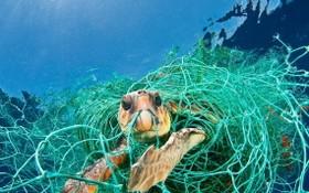 塑料垃圾污染嚴重危害到海洋生態系統。