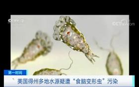 這種單細胞生物經鼻腔進入人腦後可引發原發性阿米巴腦膜腦炎。(圖源:CCTV視頻截圖)