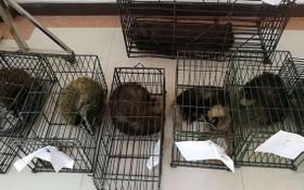 圖為中國警方破獲一宗非法販賣野生動物案。(圖源:互聯網)