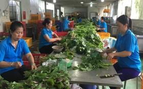 生產無公害蔬菜的福安合作社(平政縣)的資金和人力缺乏。