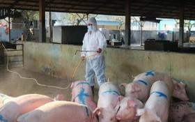 獸醫防疫人員在某豬隻養殖場進行噴灑消毒。(圖源:秋莊)