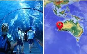 西澳大利亞的水族館