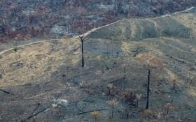巴西官方數據顯示,亞馬遜森林砍伐面積創下12年新高。 (圖源:綠色和平)