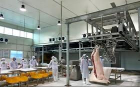 越南MM Mega Market公司在北部開設的首個豬肉中轉站已於最近正式投入活動。