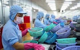 圖為某水產公司的黑虎蝦粗加工工段。(圖源:互聯網)