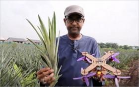 馬來西亞的研究人員成功研發出利用菠蘿葉纖維製造無人機框架的方法。(圖源:互聯網)