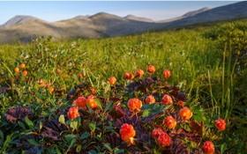俄國遠東地區的野莓由於價格下跌及當地加工設施嚴重不足,出口量因而飆升。