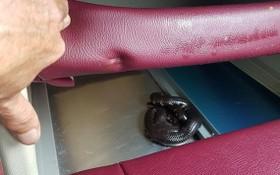 人們發現一條蛇竄進車座墊底下。(圖源:N. Sơn)
