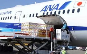 日本採購的第2批輝瑞疫苗21日由全日空(ANA)專機運輸,抵達東京成田機場。(圖源:AP)