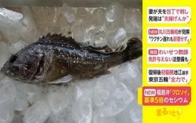 日本再次捕撈到含有放射性物質超標的魚類。(圖源:互聯網)