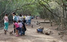 遊客在芹耶紅樹林猴子島遊覽。(圖源:T.C.L)
