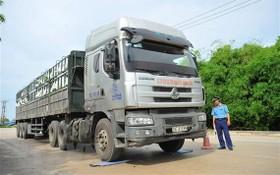 寧平省交通監察員在檢查一輛卡車的貨運載重。(圖源:越通社)