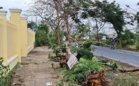 一棵鳳凰樹連根拔起壓死一名女護士。